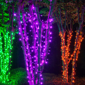 70 5mm Purple LED Halloween Lights on Black Wire
