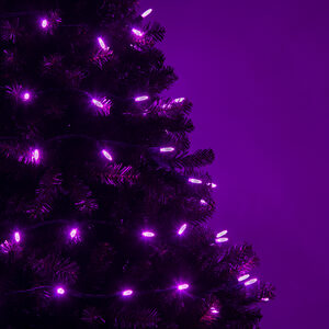 70 M5 Purple LED Halloween Lights on Green Wire