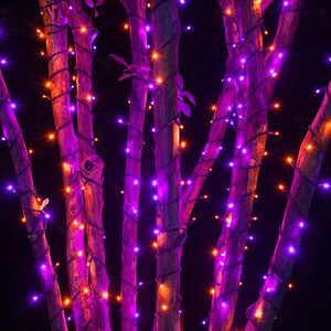 70 5mm Purple, Orange LED Halloween Lights on Black Wire