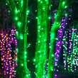 70 5mm Green LED Halloween Lights on Black Wire