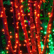 50 5mm Amber LED Halloween Lights on Green Wire